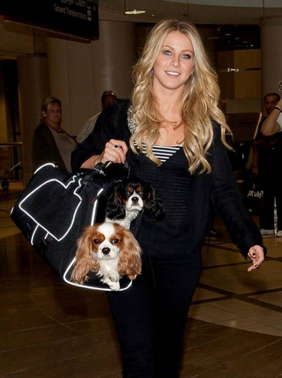 Julianne Hough's Dog
