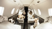Victor private jet-share marketplace 'Furs Class' service puts pets on jets