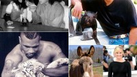 Celebrities and their Exotic Pets