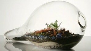 Terrariums by Paula Hayes – Capturing nature in miniature and under glass