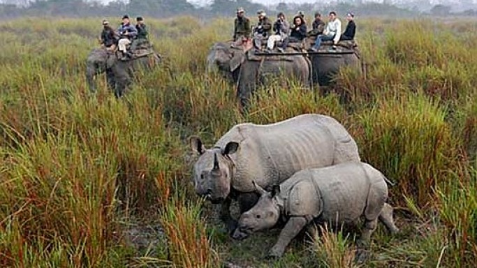 Wealthy Chinese pay $126,000 to shoot rhinoceros